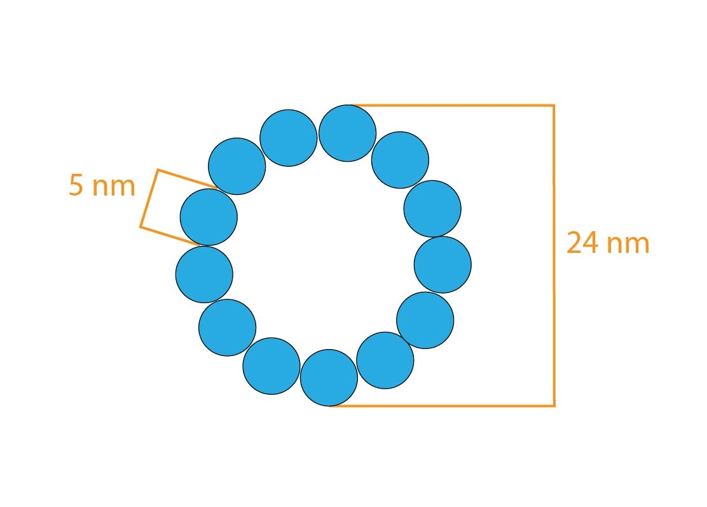 mikrotubulus-01