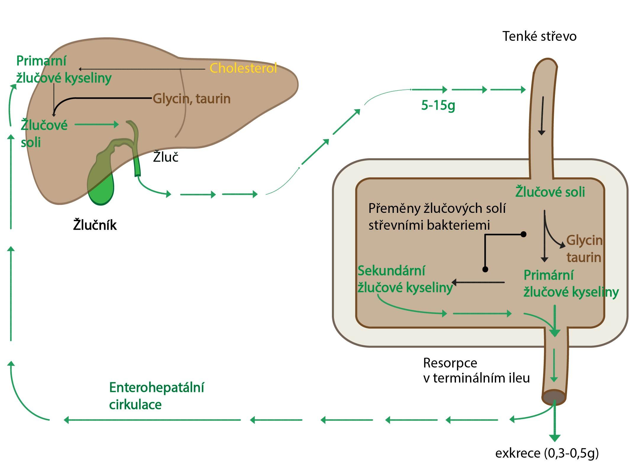 Metabolismus zlucovych kyselin-01