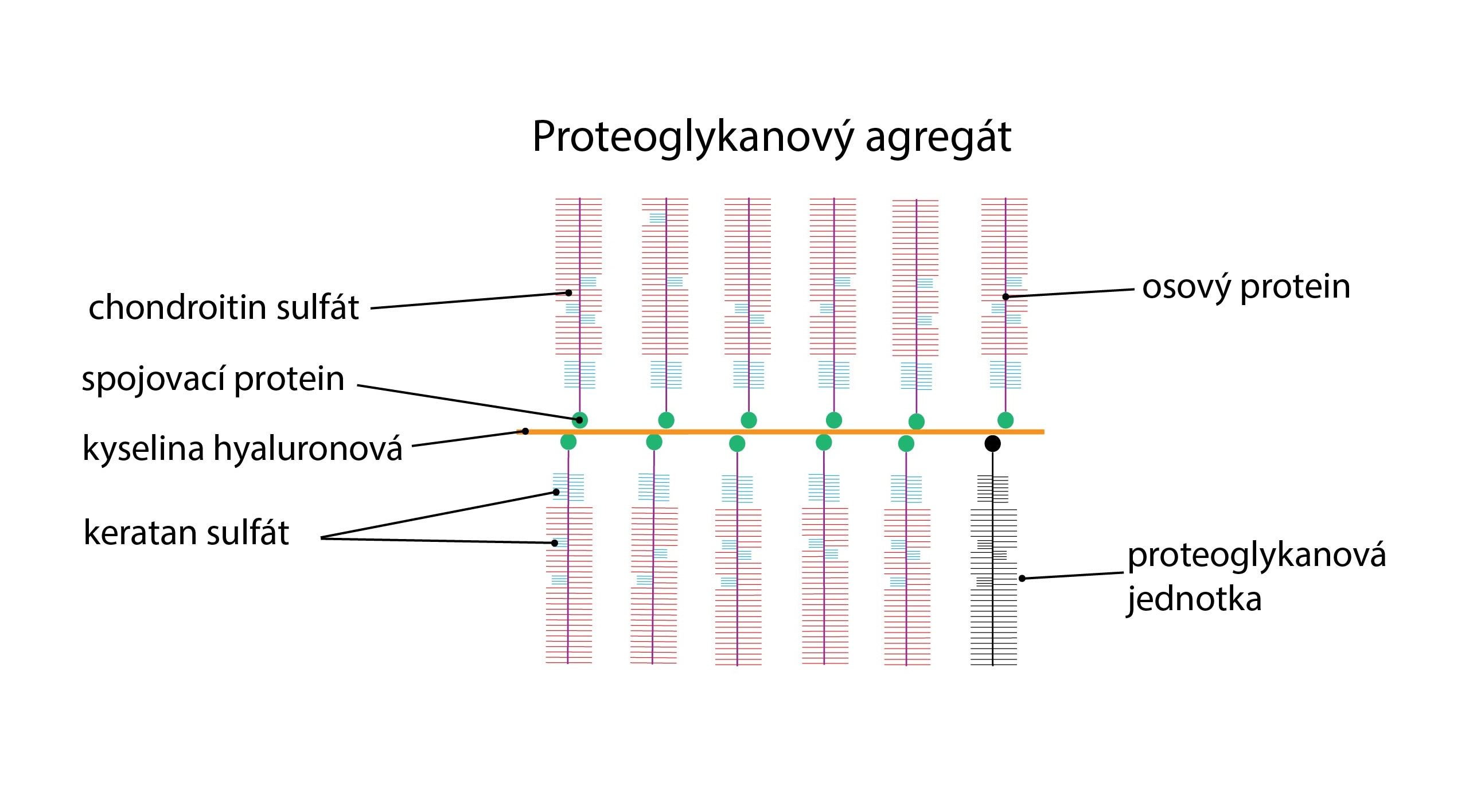 Proteoglykan-01