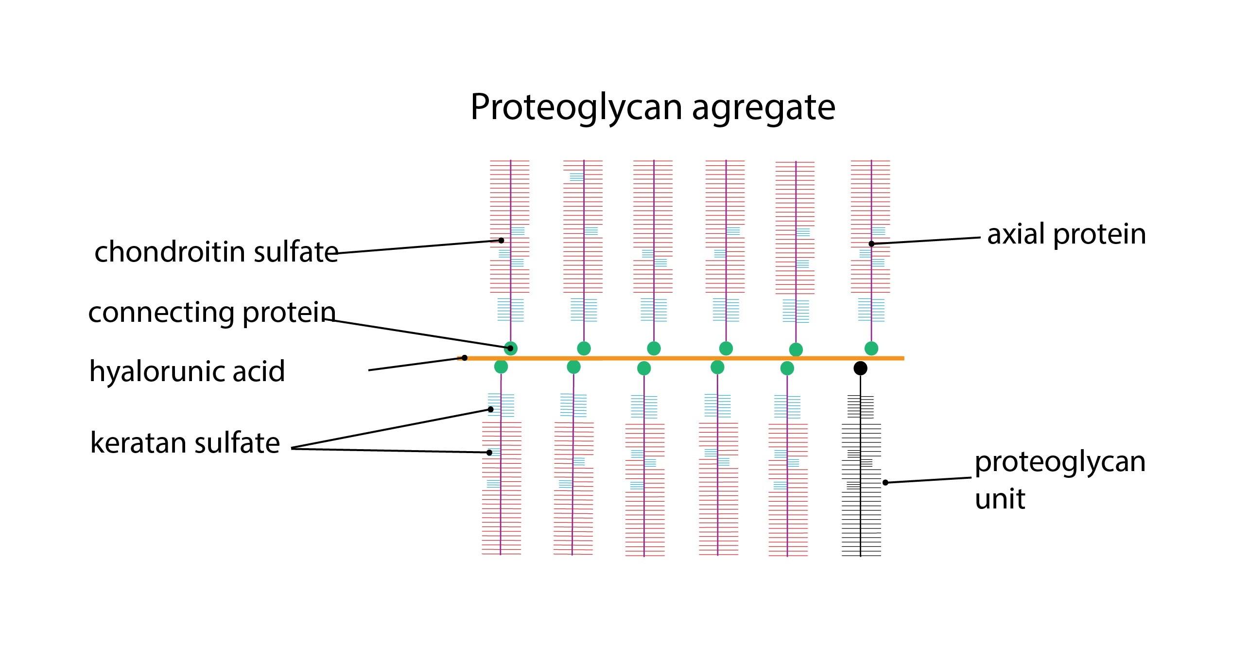 Proteoglykan ENG-01