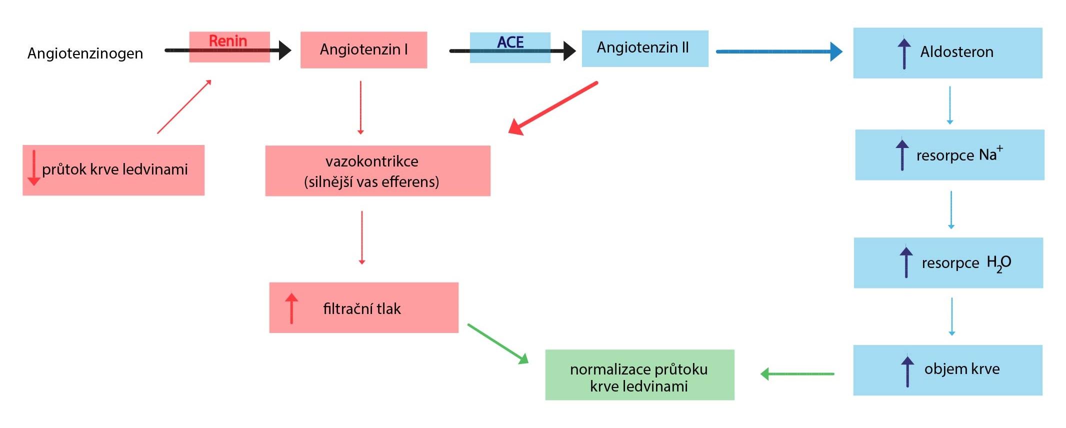 renin-angiotenzin-aldosteron-01